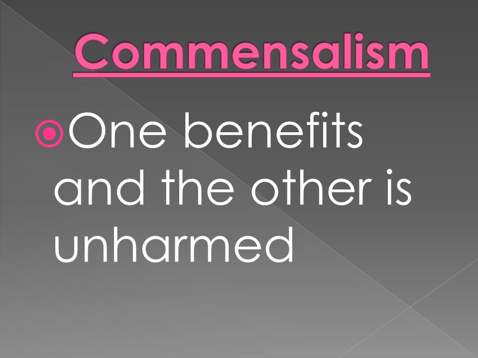 Commensalism One benefits and the other is unharmed