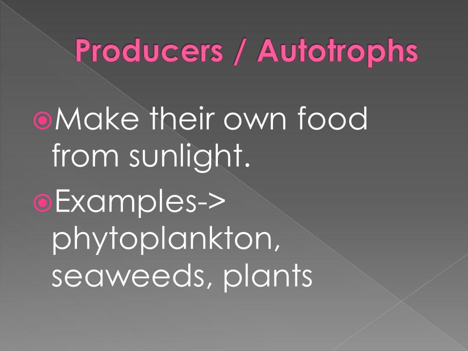 Producers / Autotrophs