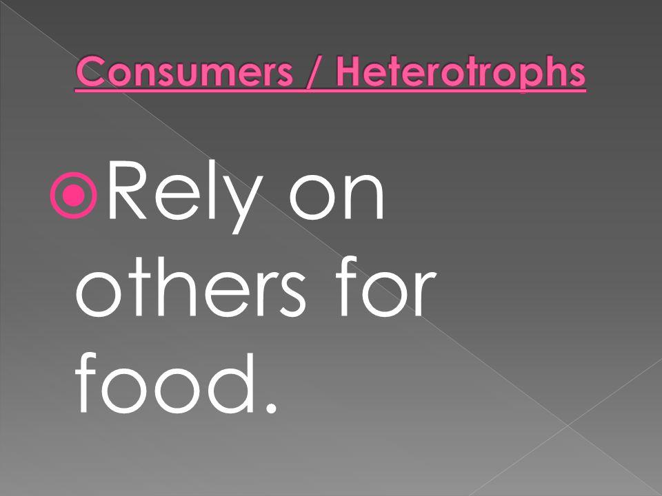 Consumers / Heterotrophs