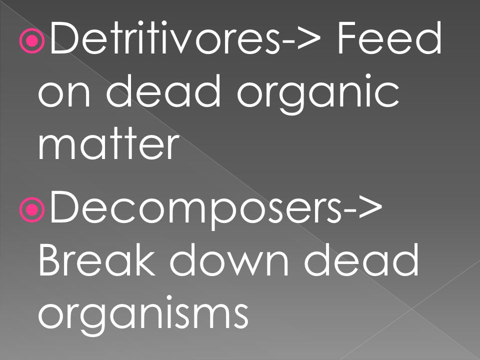 Detritivores-> Feed on dead organic matter