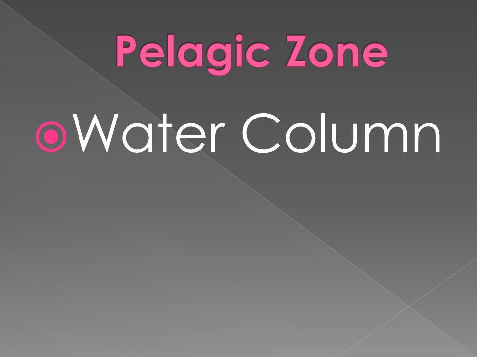Pelagic Zone Water Column