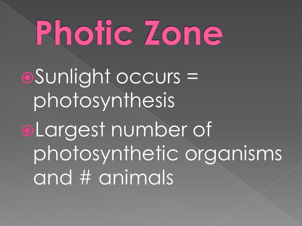 Photic Zone Sunlight occurs = photosynthesis