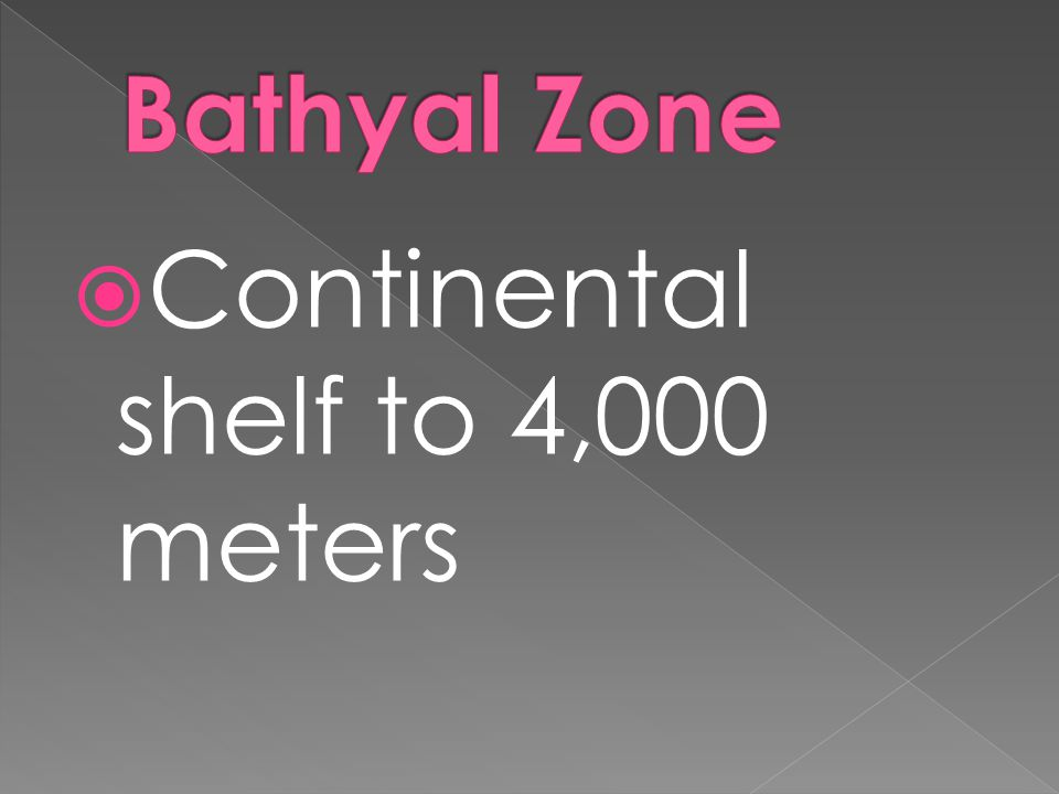 Bathyal Zone Continental shelf to 4,000 meters