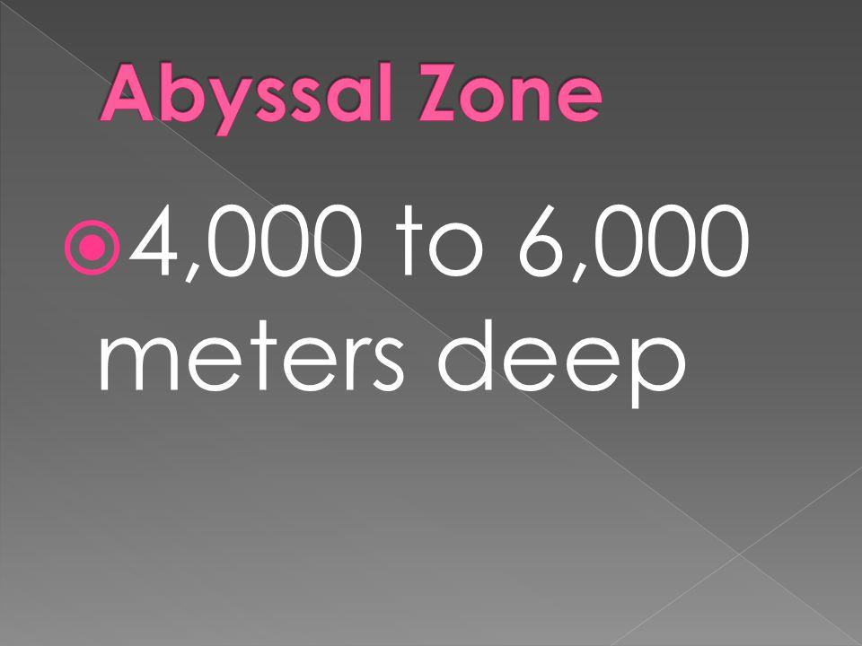 Abyssal Zone 4,000 to 6,000 meters deep