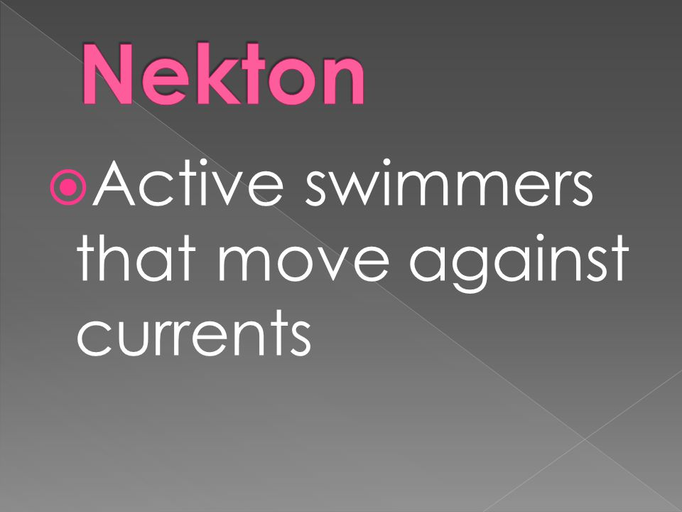 Nekton Active swimmers that move against currents
