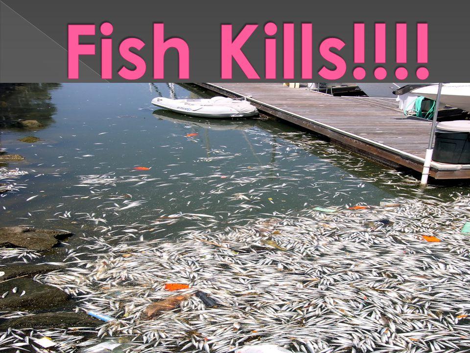 Fish Kills!!!!