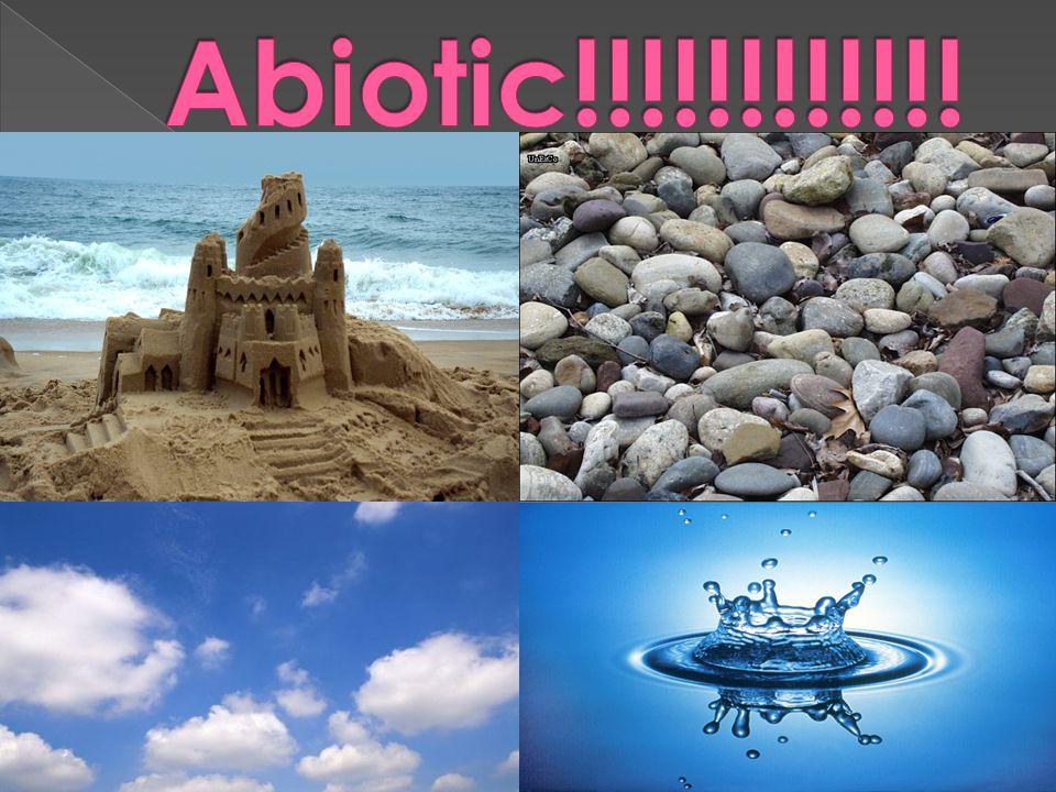 Abiotic!!!!!!!!!!!!