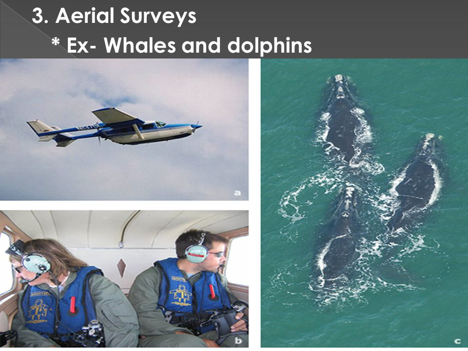 3. Aerial Surveys * Ex- Whales and dolphins