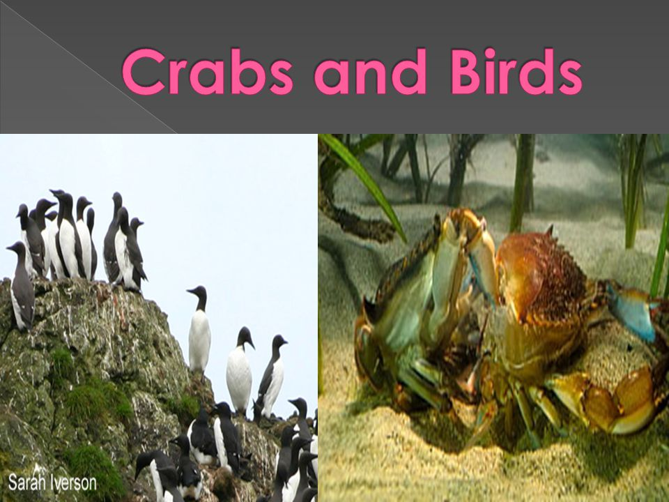 Crabs and Birds