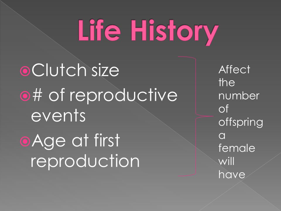 Life History Clutch size # of reproductive events
