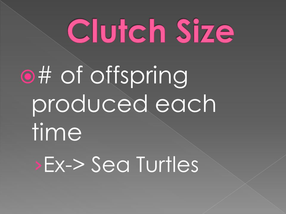 Clutch Size # of offspring produced each time Ex-> Sea Turtles