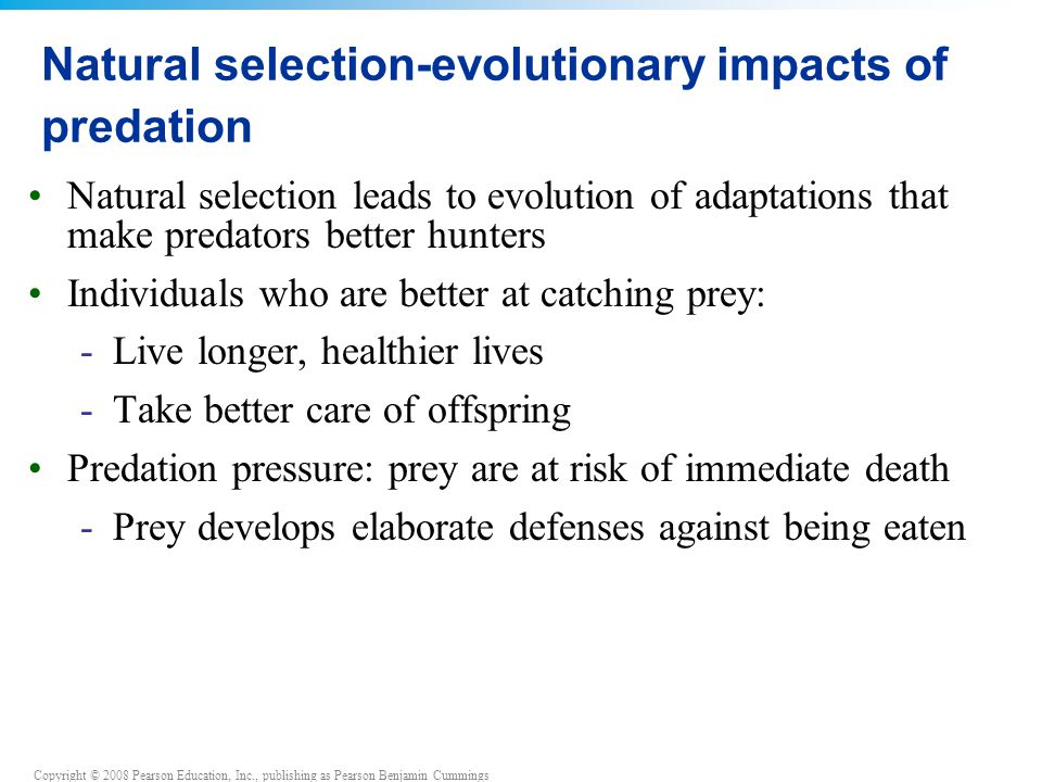 Natural selection-evolutionary impacts of predation