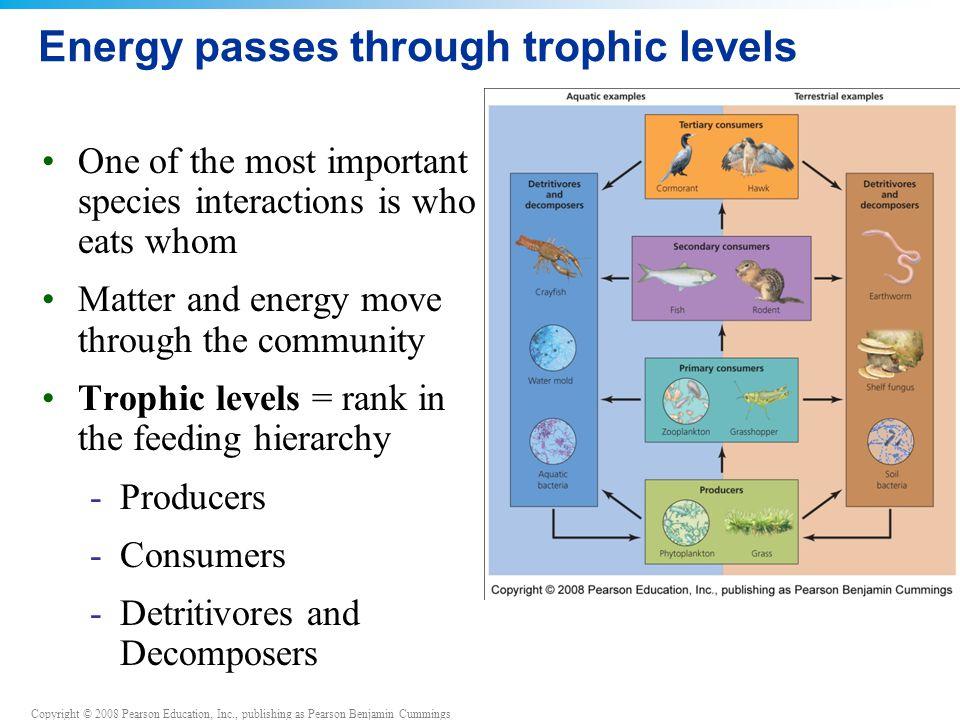 Energy passes through trophic levels