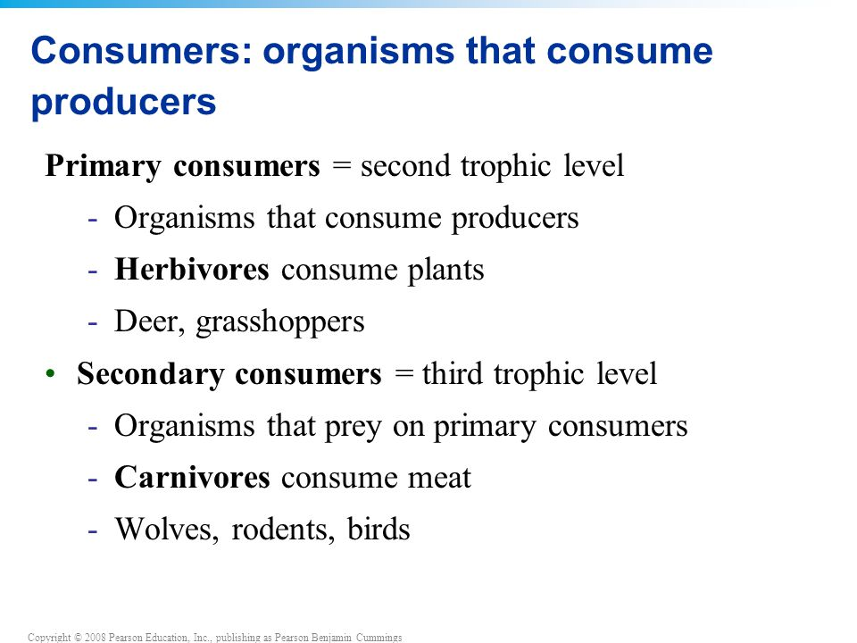 Consumers: organisms that consume producers