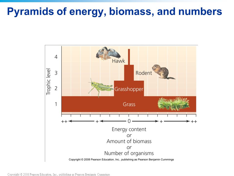 Pyramids of energy, biomass, and numbers