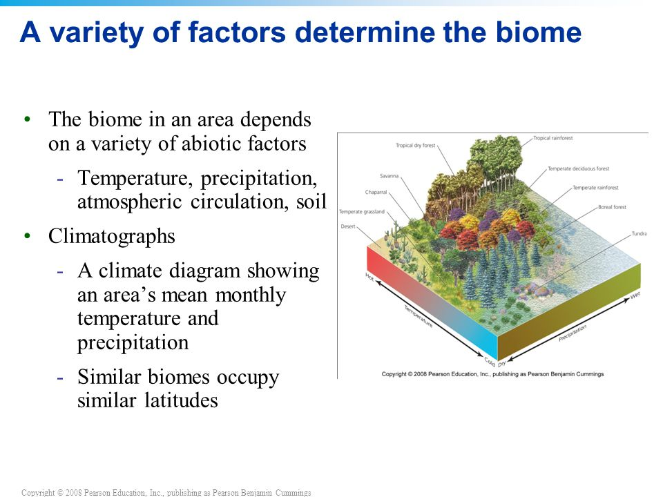 A variety of factors determine the biome
