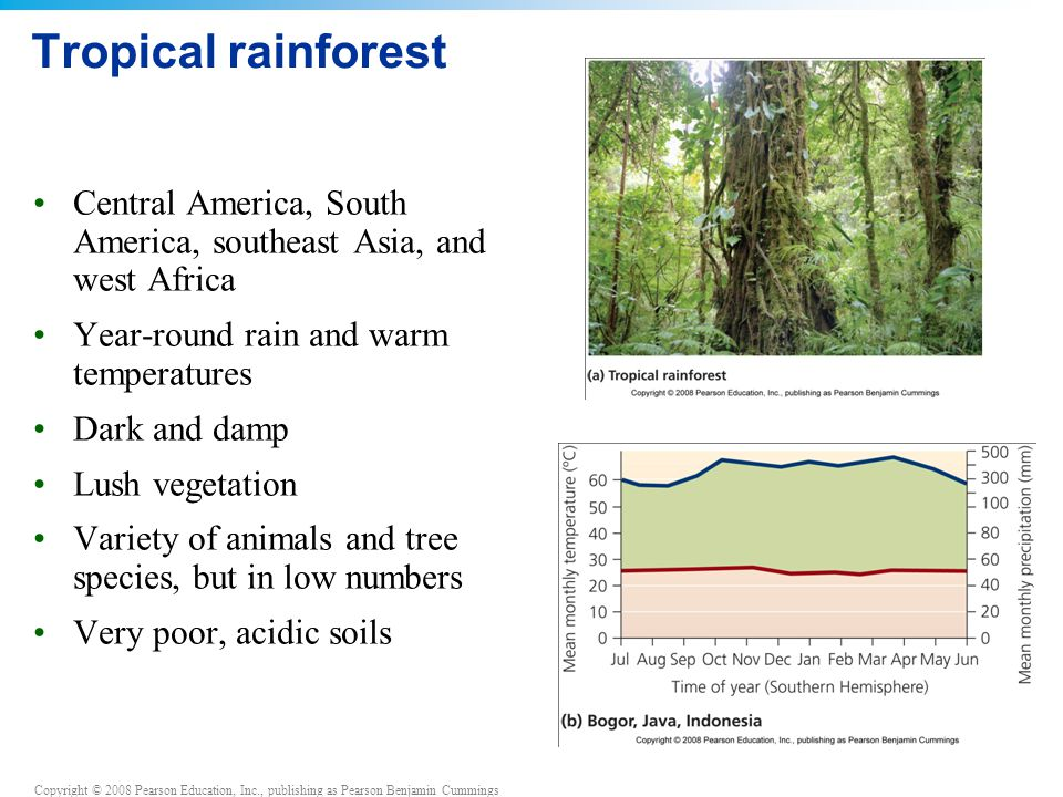 Tropical rainforest Central America, South America, southeast Asia, and west Africa. Year-round rain and warm temperatures.