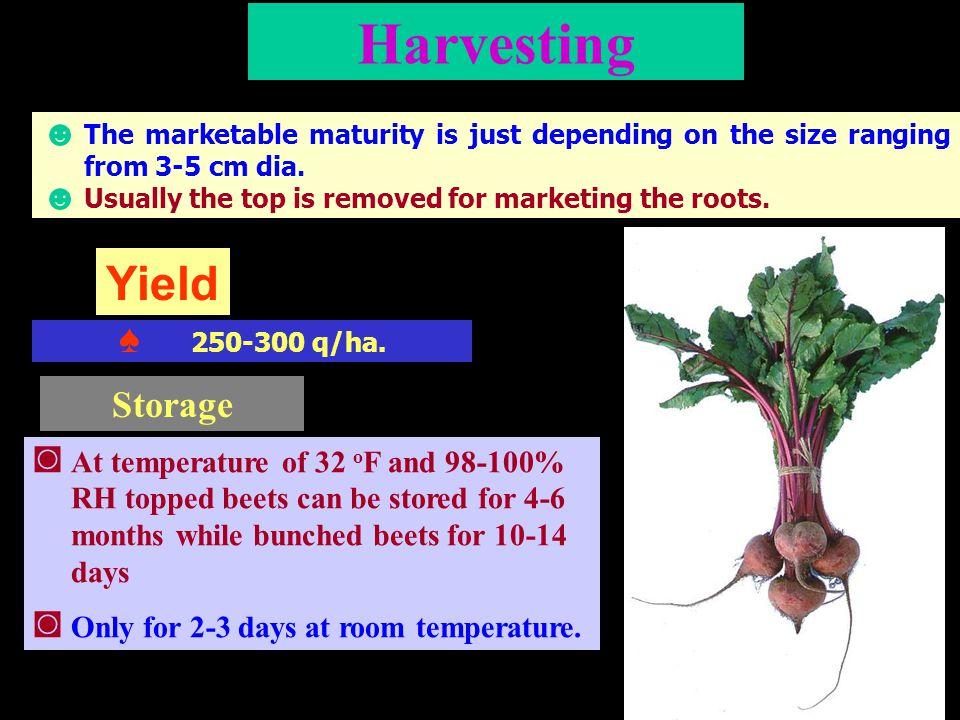 Harvesting Yield Storage