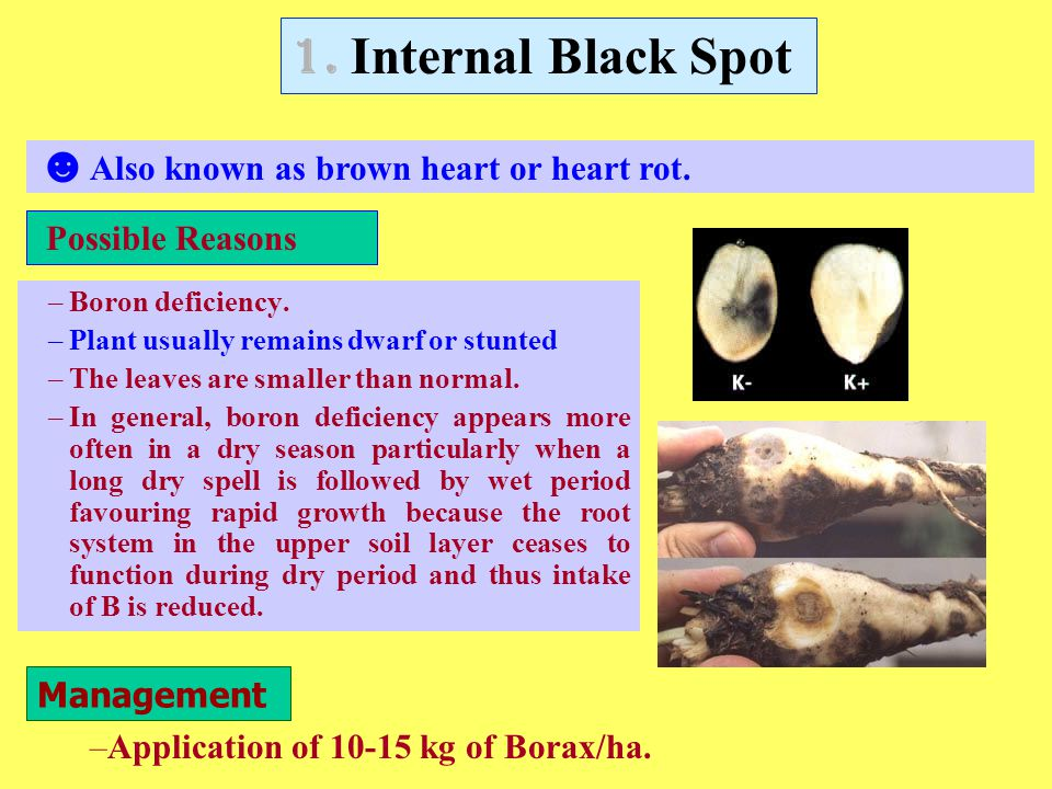 1. Internal Black Spot Also known as brown heart or heart rot.