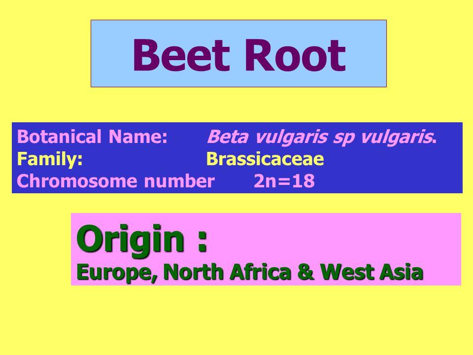 Beet Root Origin : Europe, North Africa & West Asia