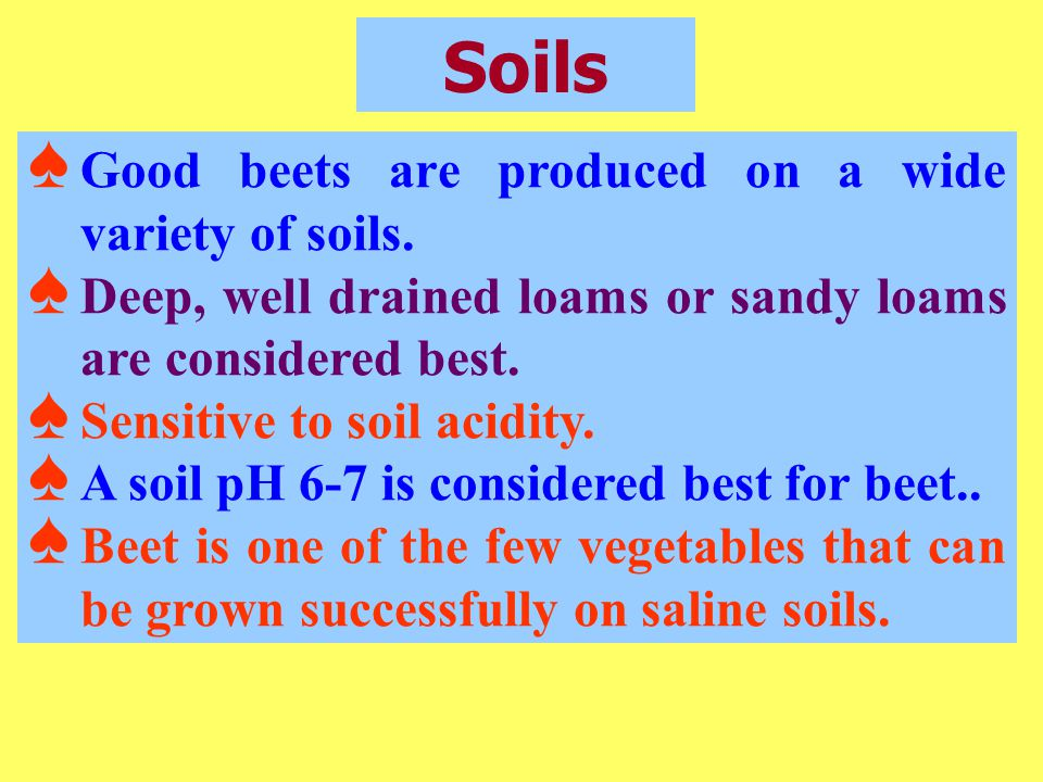 Soils Good beets are produced on a wide variety of soils.