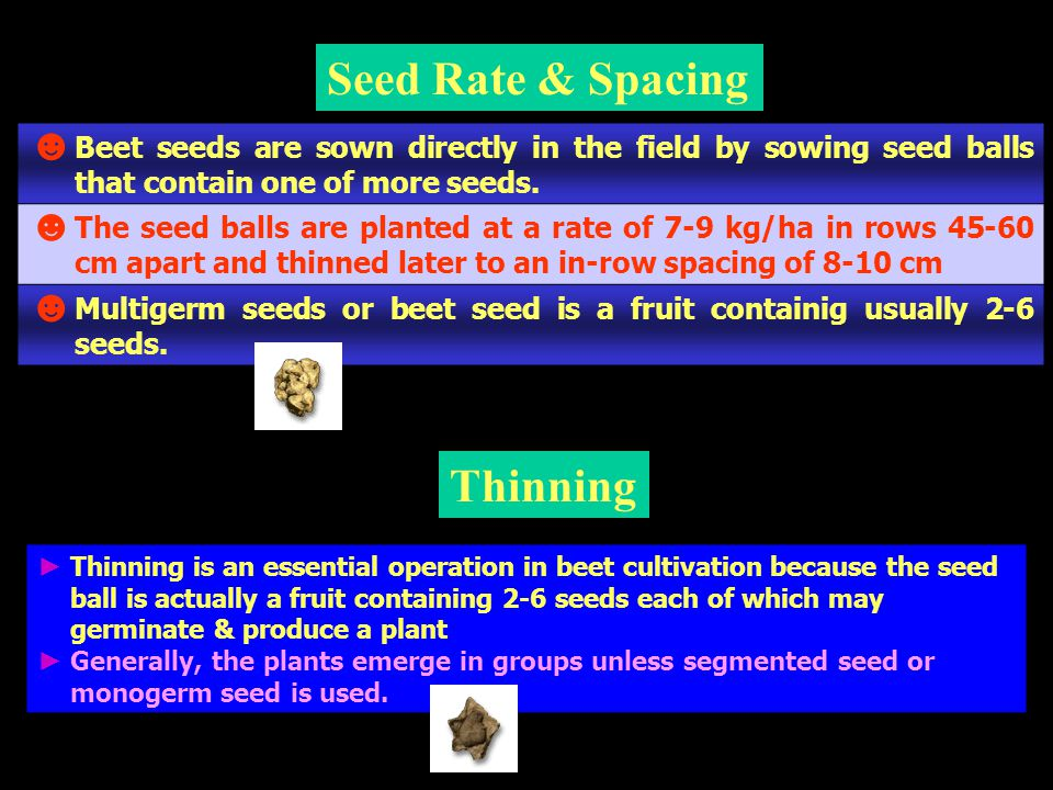 Seed Rate & Spacing Thinning
