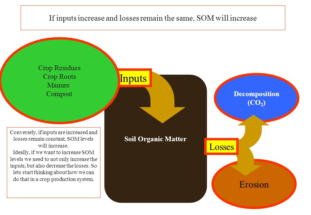 If inputs increase and losses remain the same, SOM will increase