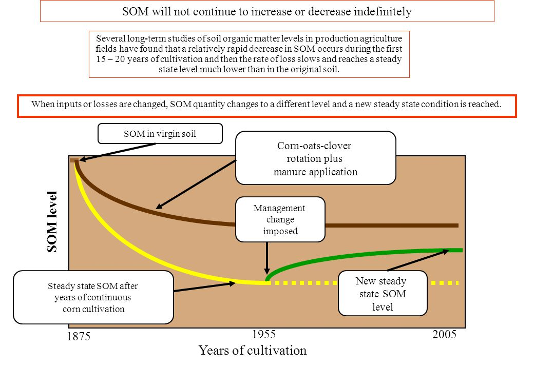 SOM will not continue to increase or decrease indefinitely