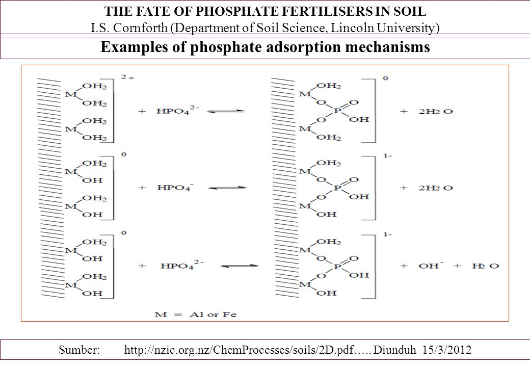 Examples of phosphate adsorption mechanisms