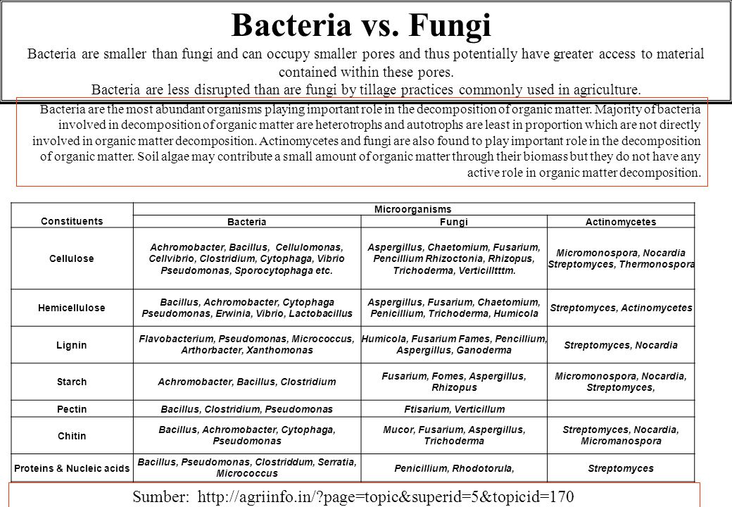 Bacteria vs. Fungi Bacteria are smaller than fungi and can occupy smaller pores and thus potentially have greater access to material contained within these pores.
