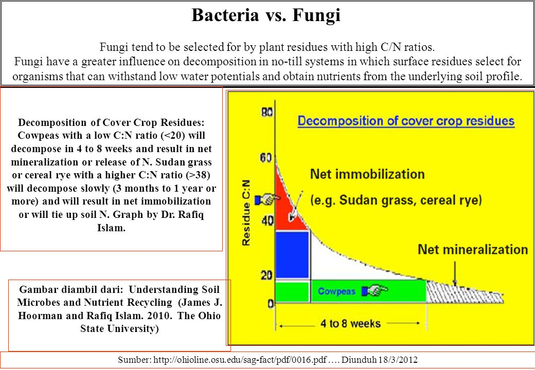 Fungi tend to be selected for by plant residues with high C/N ratios.