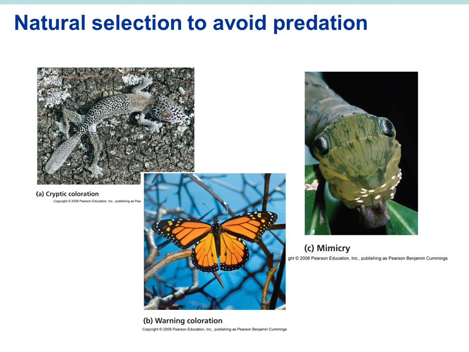 Natural selection to avoid predation