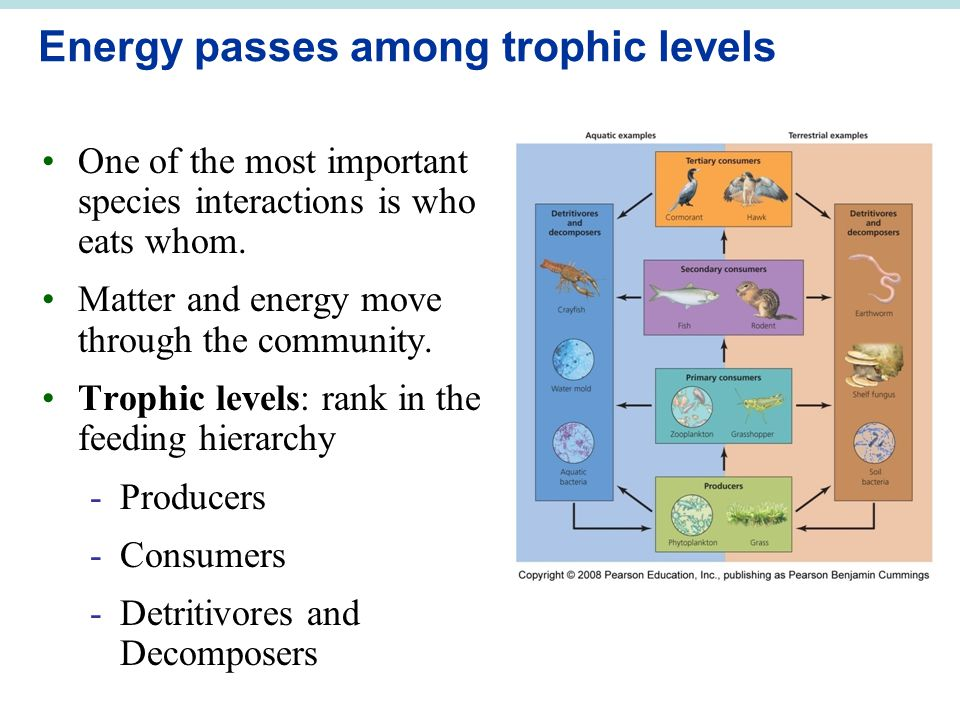 Energy passes among trophic levels