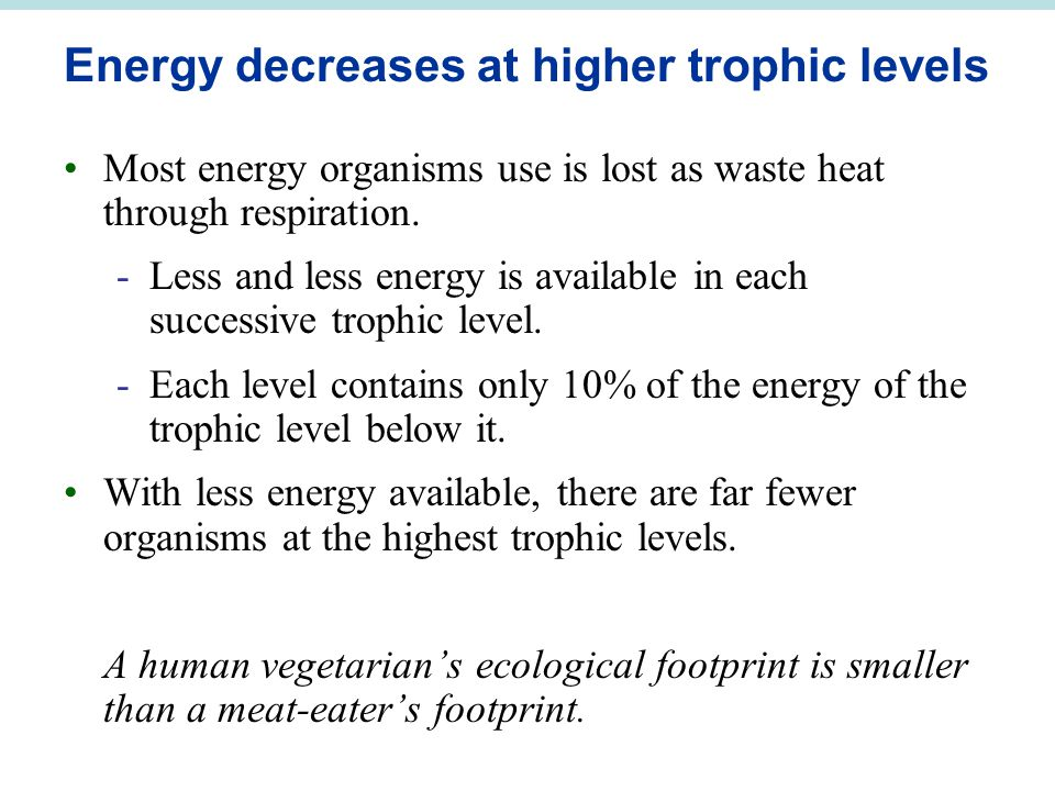 Energy decreases at higher trophic levels