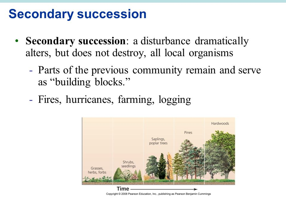 Secondary succession Secondary succession: a disturbance dramatically alters, but does not destroy, all local organisms.