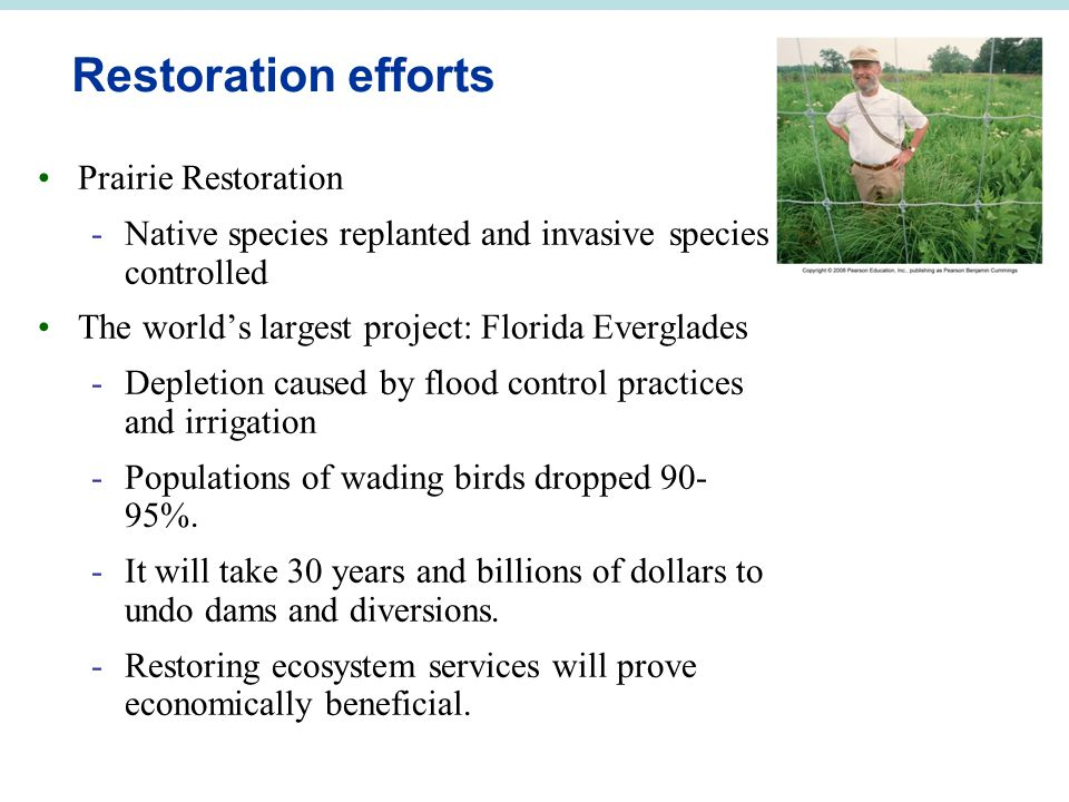 Restoration efforts Prairie Restoration