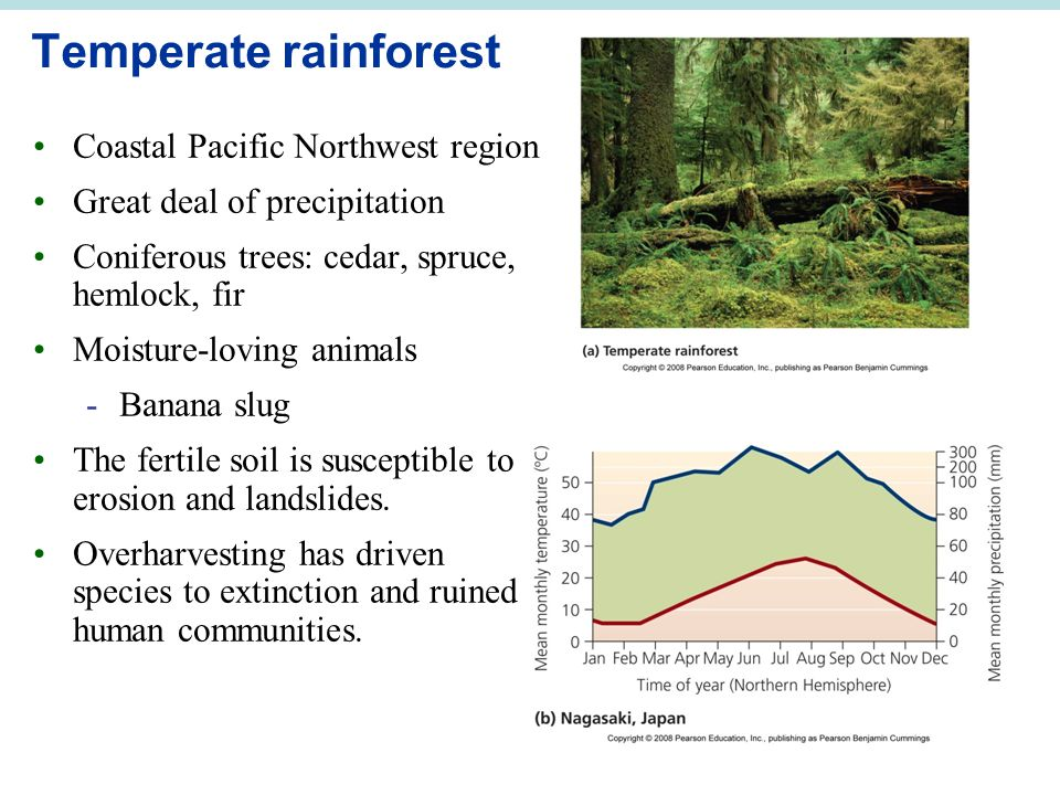 Temperate rainforest Coastal Pacific Northwest region