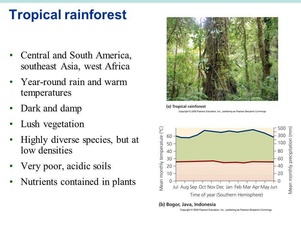 Tropical rainforest Central and South America, southeast Asia, west Africa. Year-round rain and warm temperatures.