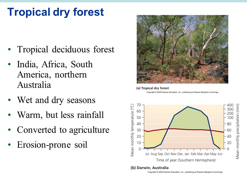 Tropical dry forest Tropical deciduous forest