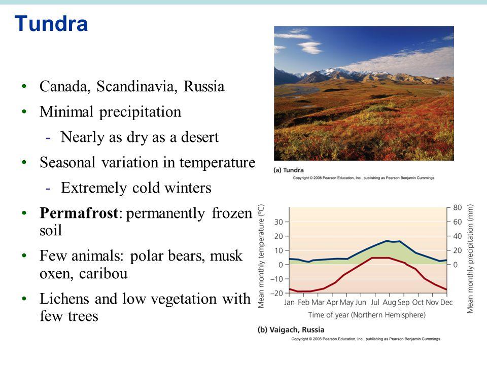 Tundra Canada, Scandinavia, Russia Minimal precipitation