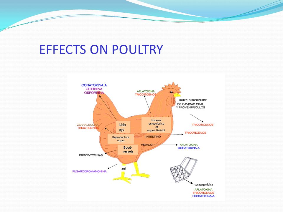 EFFECTS ON POULTRY kidneys mucous membrane Bood- vessels