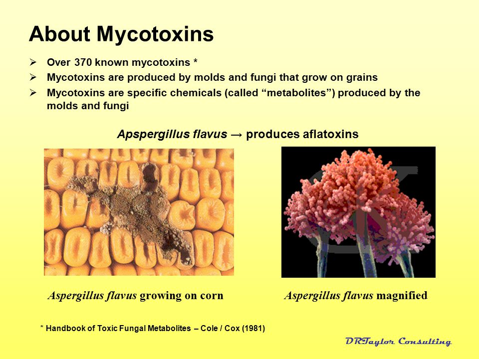 """essay on mycotoxins In 2005, at the height of viciousness of mold litigation, defense interests loved using a california idea (""""geffcken"""") that held that if a plaintiff couldn't show the presence of the same mycotoxins in his body that were found in a wet building, then causation couldn't be proven."""