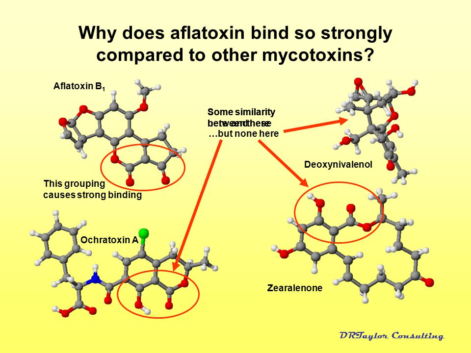 Why does aflatoxin bind so strongly compared to other mycotoxins