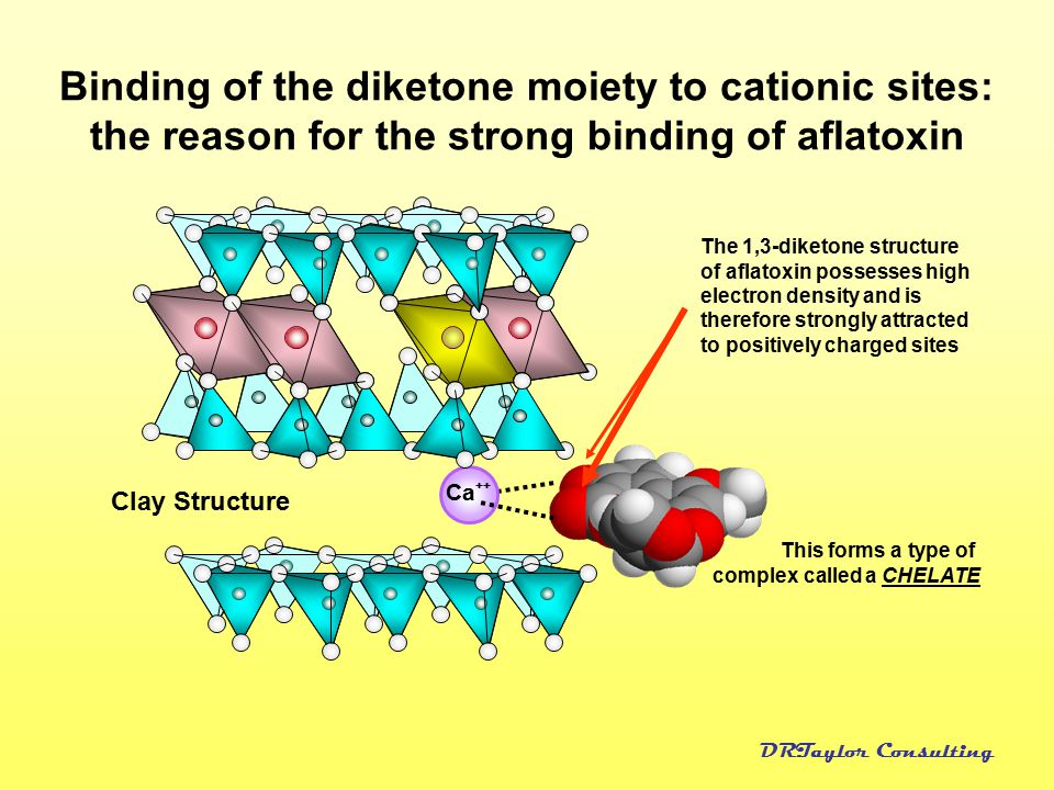 Binding of the diketone moiety to cationic sites: the reason for the strong binding of aflatoxin