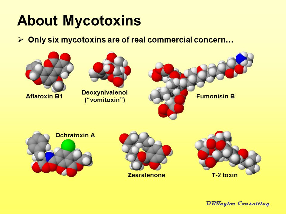 About Mycotoxins Only six mycotoxins are of real commercial concern…