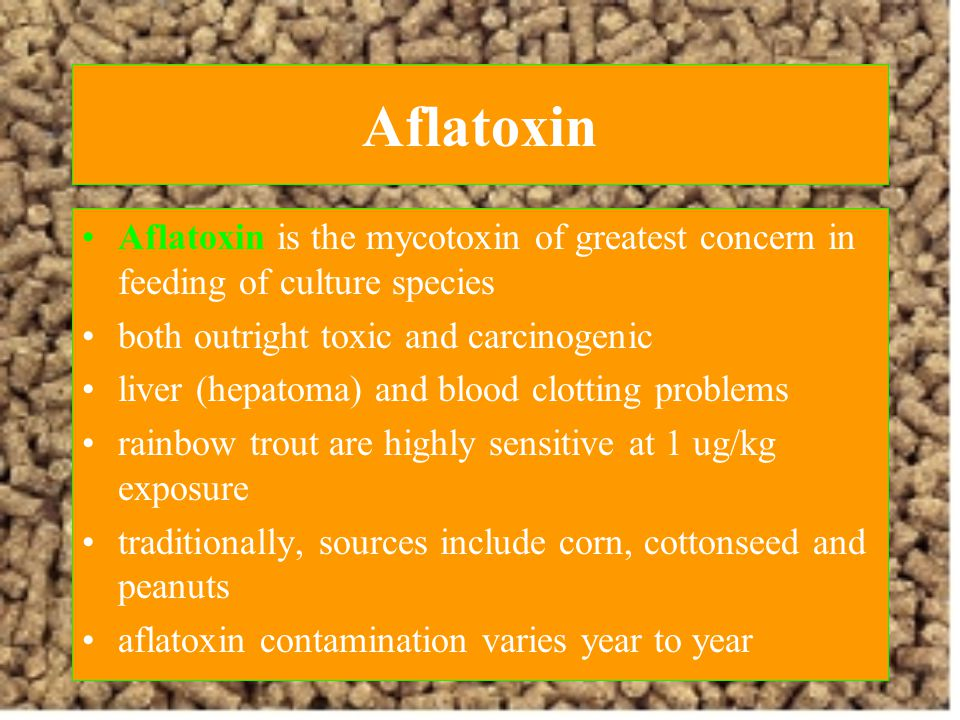 Aflatoxin Aflatoxin is the mycotoxin of greatest concern in feeding of culture species. both outright toxic and carcinogenic.