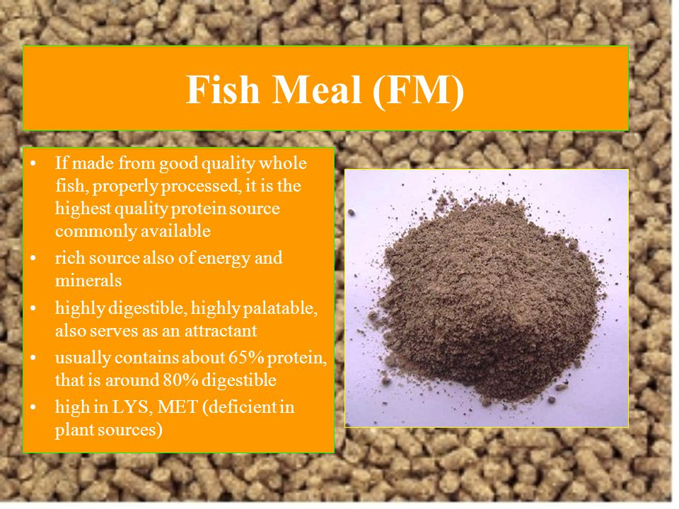 Fish Meal (FM) If made from good quality whole fish, properly processed, it is the highest quality protein source commonly available.