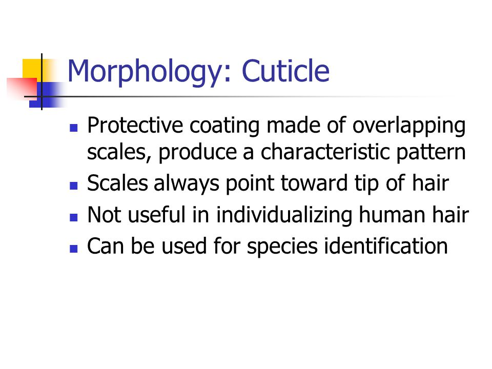 Morphology: Cuticle Protective coating made of overlapping scales, produce a characteristic pattern.