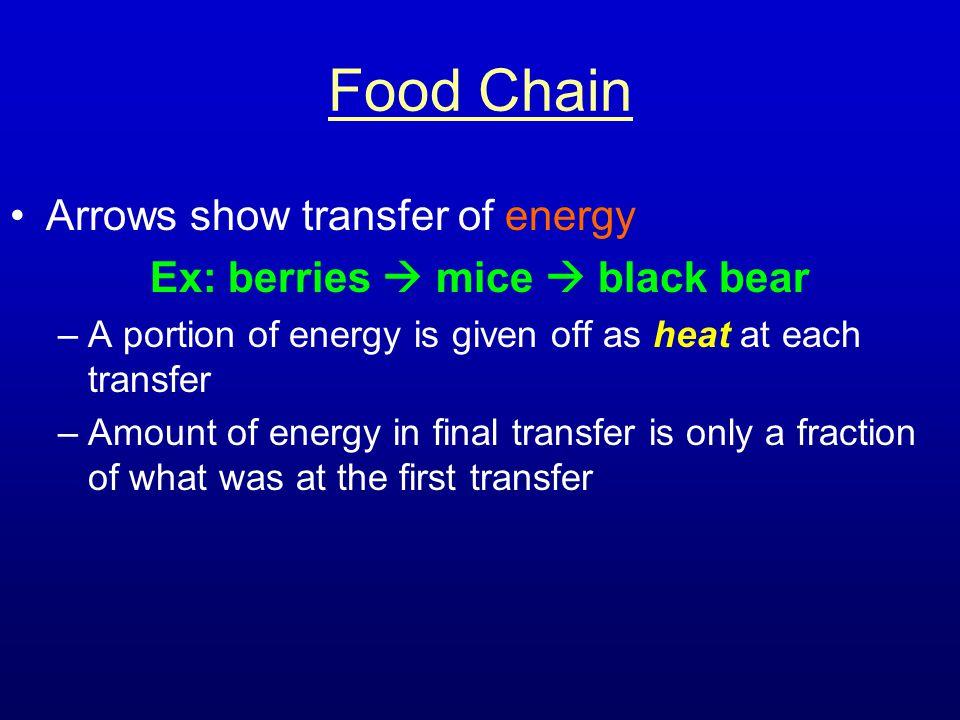 Ex: berries  mice  black bear