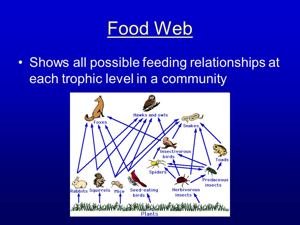 Food Web Shows all possible feeding relationships at each trophic level in a community